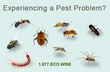 Common Insects Controlled by Eco-Wise
